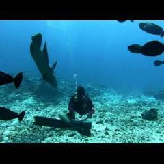 GUDA Drum under water